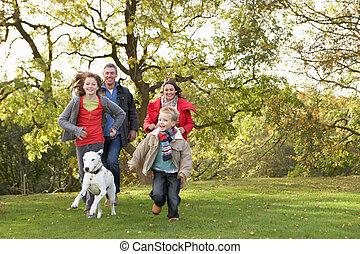 família jovem, ao ar livre, andar, através, parque, com, cão