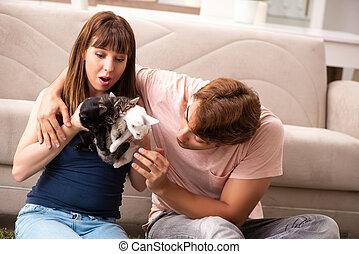 família jovem, com, gatinho, tocando, casa
