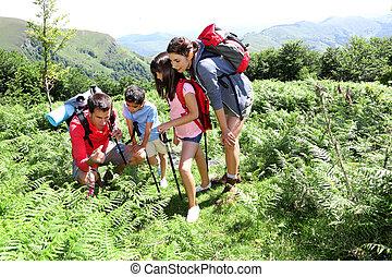família, olhar, trekking, flores selvagens, dia