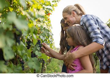 família, vinhedo, colher, vinho, grower, antes de