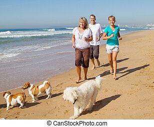 familia , y, mascotas, jogging, en, playa