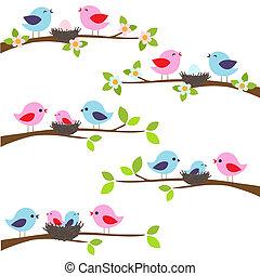 familie, von, vögel