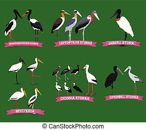 families., cigognes, collection, oiseau, ensemble, dessin animé