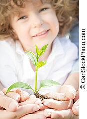 familj, holdingen, grön, ung växt