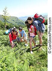 familj, på, a, trekking, dag, tittande vid, vild blommar
