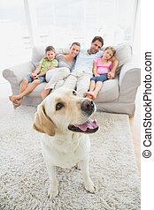 famille heureuse, s'asseoir divan, à, leur, chouchou, jaune,...