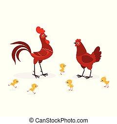 famille, isolé, illustration, fond, poulet, blanc rouge