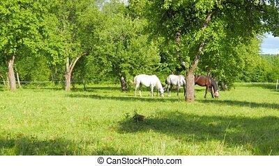 famille, paître, chevaux