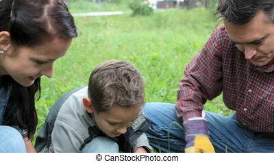 famille, planter, pousse, dehors