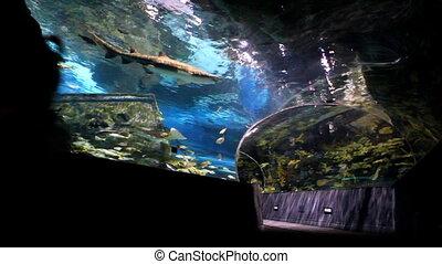 Family at Aquarium 2