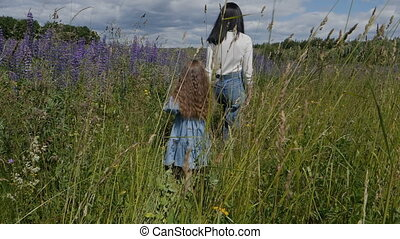 A little girl with her mother walks through a field of lupins. Beautiful blooming flowers in summer.