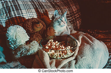 Family evening. The cat is watching a movie with friends bears