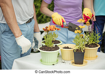 Family gardeners with kid planting flowers in pots with soil in farm
