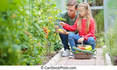 Family gathering crop of cucumbers, pepers and tomatoes in...