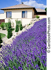Family house with lavender field