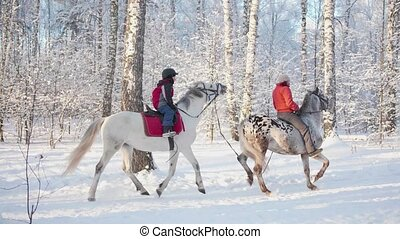Family in winter Park, a stroll on horseback. Horse riding. Walk in the fresh air