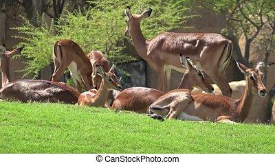 Family Of Deer Wild Animals