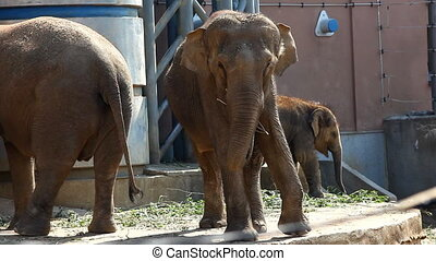 Family of elephant feed in zoo