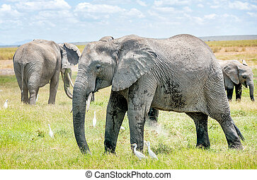 Family of Elephants in Kenya, Africa