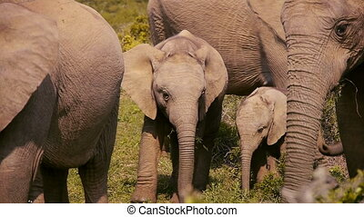 family of elephants in south africa