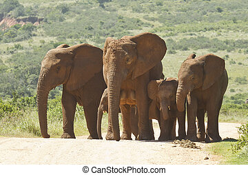 Family of elephants walking along a dusty road