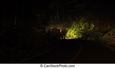 Family of Five Wild Elephants in Car Lights are Blocked the...