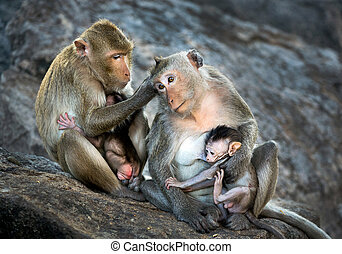 Family of monkeys.