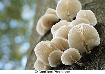 Family of mushrooms on a tree trunk