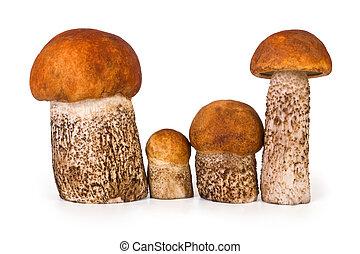 Family of mushrooms on white background