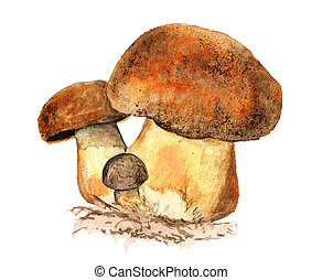 Watercolor illustration of edible mushrooms isolated on white backdrop. Organic healthy natural food. Botanical drawing.