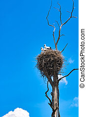 Family of storks in a nest on an old tree against the background of the blue sky.
