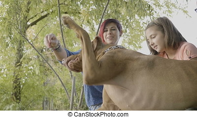 Family of three in the park playing with their dog - Mather...