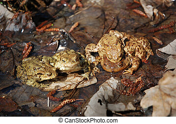 Family of toads in swamp