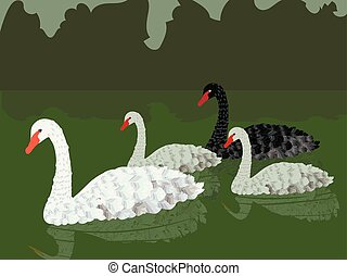 family of vector white gray and black swans floating on a green pond with reflection and green dark bushes