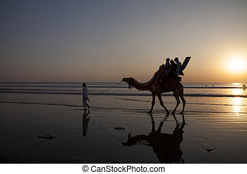 Family on a camel ride as the sun sets near the sea