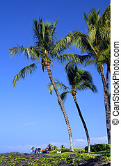 Family Picnic under Palm Fronds - Family of five picnic...