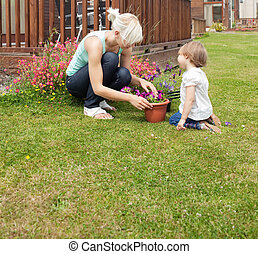 Family plant  flowers in the sunshine