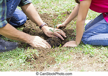 Family Planting - Family holding young green plant in hands....