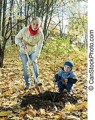 family planting tree   in autumn