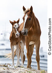 Family Portrait - Family picture of mother and her baby with...