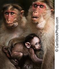 Family portrait of macaque monkeys in wild
