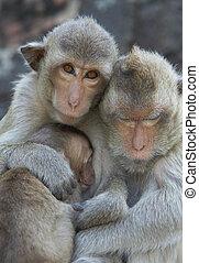 family portrait - portrait of monkey family living in Kala ...