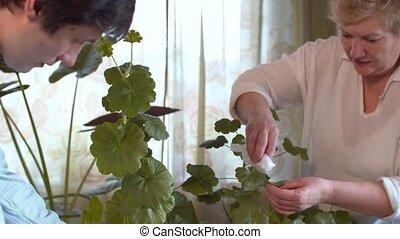 Family take care of houseplants