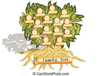 family tree on white
