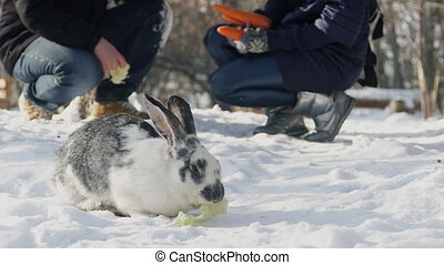 Family walking in park feeding rabbit with cabbage in winter outdoors