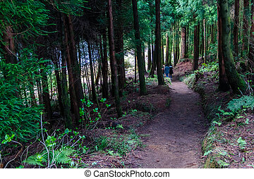 Family walking in the forest. Mysterious, suspense scenery concept.
