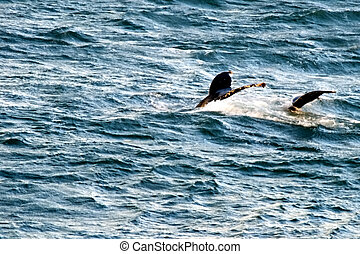 Family whales, Bering sea