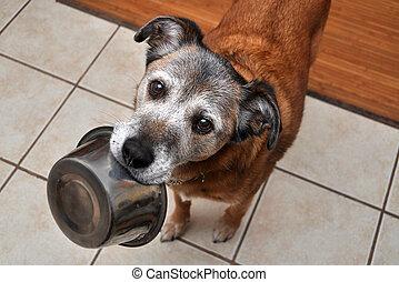 faminto, cão