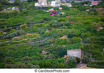 famoso, costa amalfi, vista, da, il, cliffside, città, di, ravello, italy.