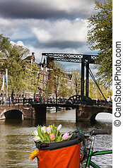 Famous Amsterdam with basket of colorful tulips against old bridge in Holland